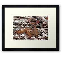 New born deer Framed Print