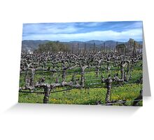 Vines in winter. Napa California. Greeting Card
