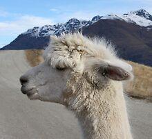 Mr Llama by carrolk