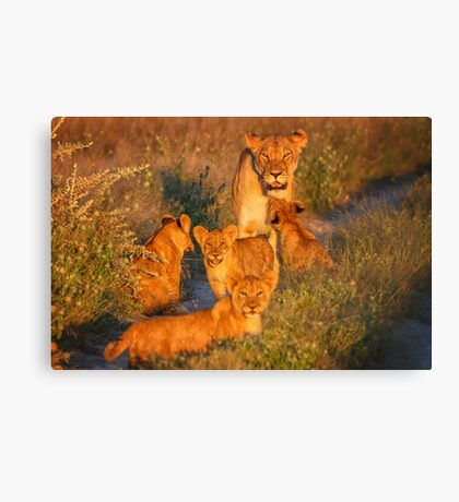 Kalahari Cub greeting Canvas Print