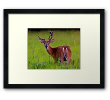 Young Buck Framed Print