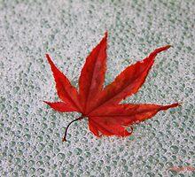 Red maple leaf by marija pavlovic