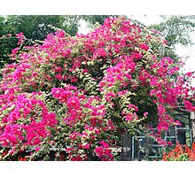 Chiang Mai 7 Photographic Print