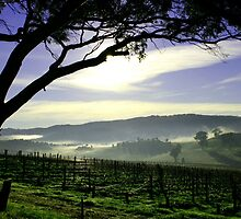 South Australia Barossa Landscape by John Wallace