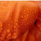 Raindrops from heaven by © Pauline Wherrell