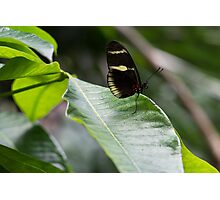 Yellow And Black Butterfly Photographic Print
