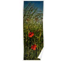 Le pavot rouge Poster