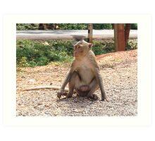 Wild monkey Art Print