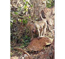 Wild monkey and baby Photographic Print