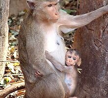 Wild monkey and baby, I love you Mammy by Feesbay