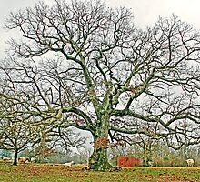 The Gathering Tree by Stephen Warren
