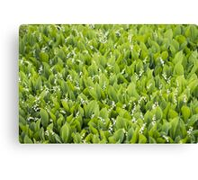 Beautiful Lily of the Valley flowers Canvas Print