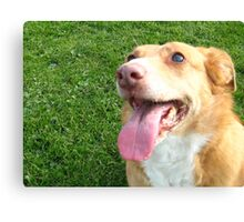 Perfect Pooch Canvas Print