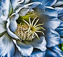 Blue by Bernie Rosser