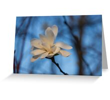 Creamy, Dreamy Wild Magnolia in the Forest Greeting Card