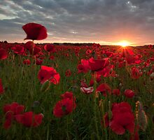 Poppy Sunset by Carl Mickleburgh