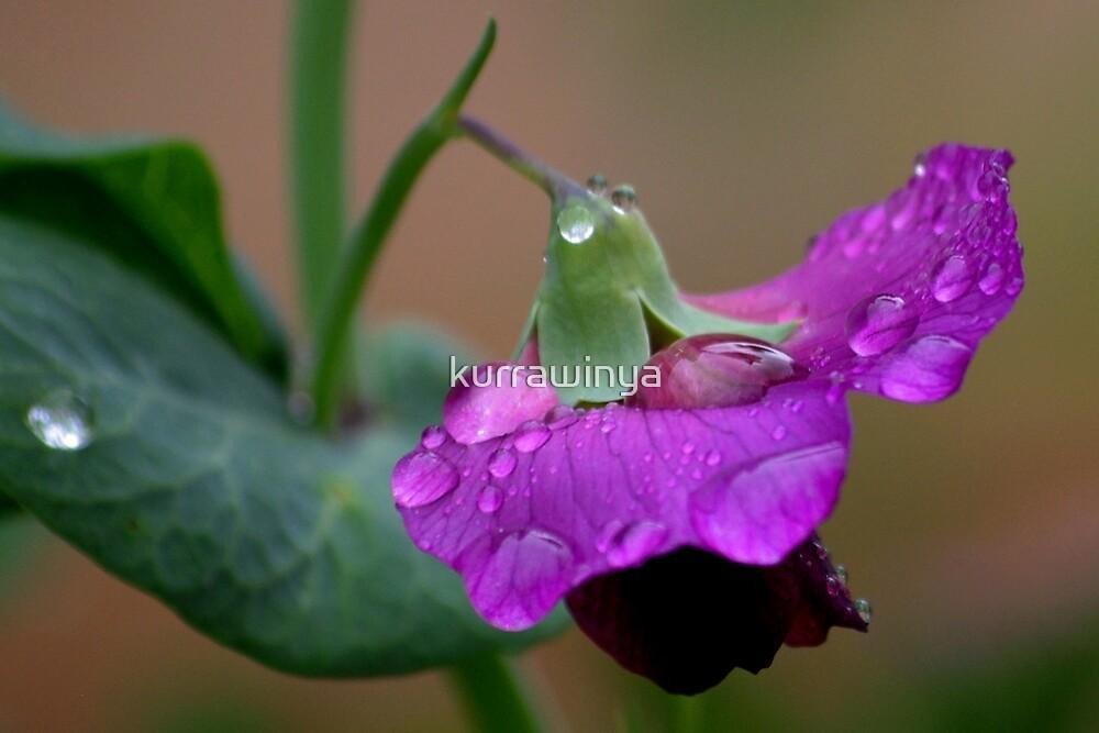 Pea flower shower by Penny Kittel