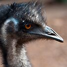 Emu by Peter Rattigan