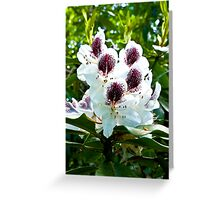 Speckled Rhodie Greeting Card