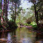 Peaceful Creek by Vanessa Barklay