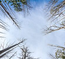 Looking up by Maddison Falls