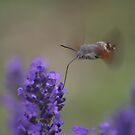 Speedy Nectar Collector  by Pamela Jayne Smith