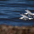 On The Wing by Jon Staniland