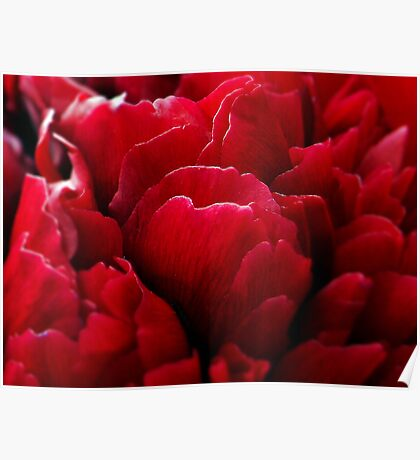 Peony Passion Poster