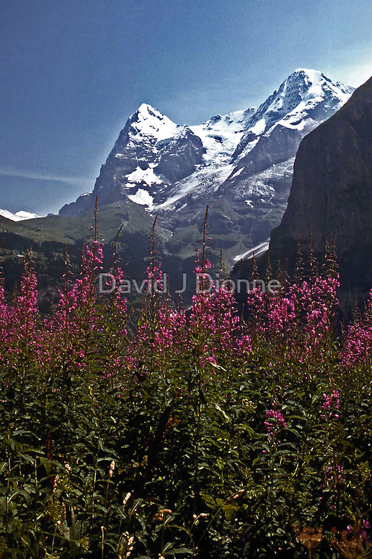 The Eiger with Flowers #1 by David J Dionne