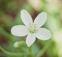 Spring Beauty by Hilary Walker