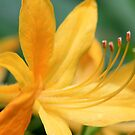 Macro Flowers by alistair simpson