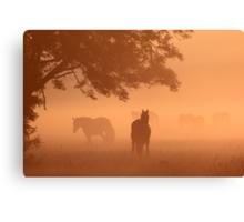 Horses in the fog Canvas Print