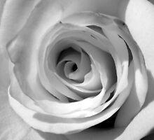 Rosey Rose by Lewkeisthename