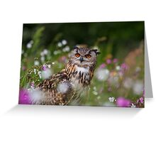 Owl in the meadow Greeting Card