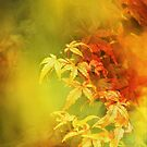 Shades of Autumn III by Chris Armytage™