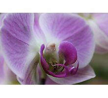 Come into my Purple World - JUSTART © Photographic Print