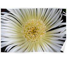 White flower 8518 Poster