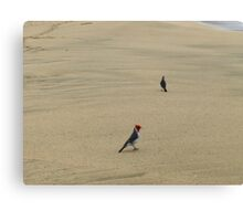 Red Crested Cardinals at the Beach Canvas Print