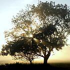 Beautiful Sunrise by angeljootje