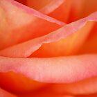 Just peachy by Gemma  Simpson