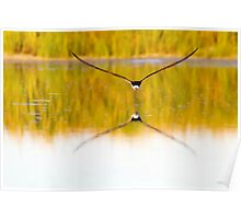 Reflecting Nature Poster