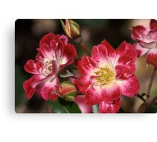 flower-cream-pink-red-roses Canvas Print