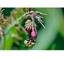 Nectar Goldmine! Photographic Print