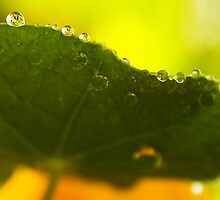 after the rain by Ingz
