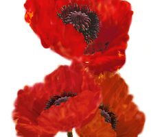 Oriental Poppy by WOBBLYMOL