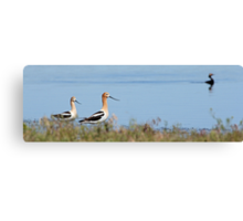 Graceful Pair in the Desert (pan) Canvas Print