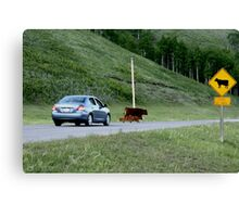 Rush hour in Kananaskis Country Canvas Print
