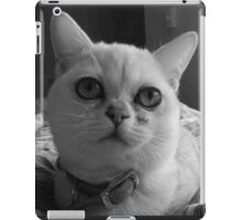 Cute kitten Burmilla in Grey iPad Case/Skin