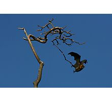 The Bat and tree Photographic Print