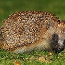 Prickly Customer by CBoyle